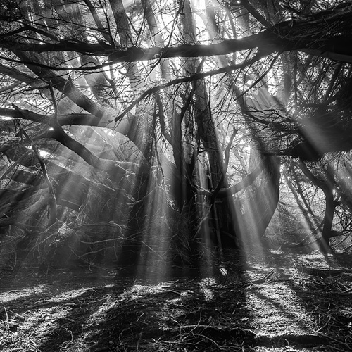 Light on the Land